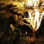 spectacular tree lighting