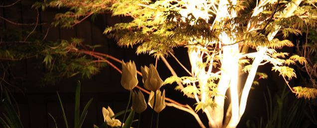 spectacular tree and garden lighting